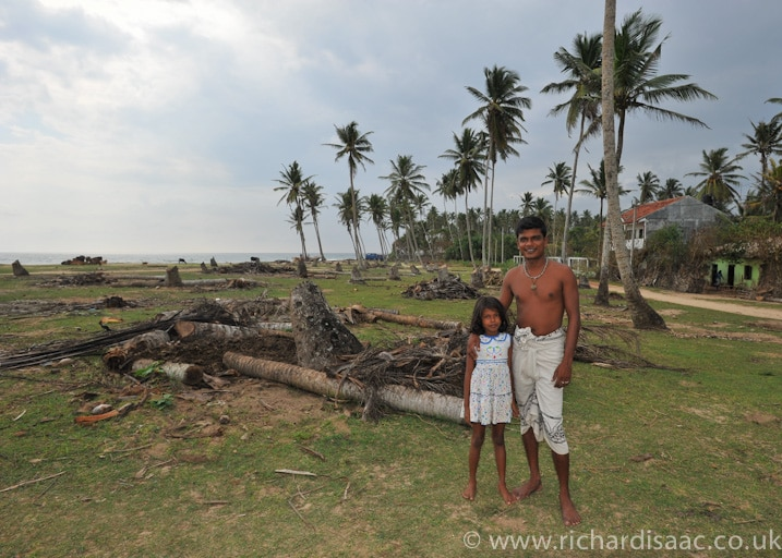 Palm trees that had been cut down due to disease - Midigama, Sri Lanka