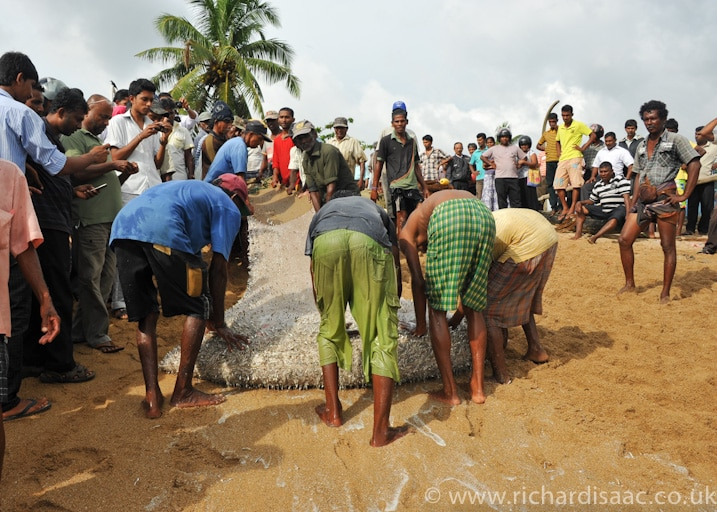 Fishermen haul their catch onto the beach in front of an expectant crowd - Galle, Sri Lanka