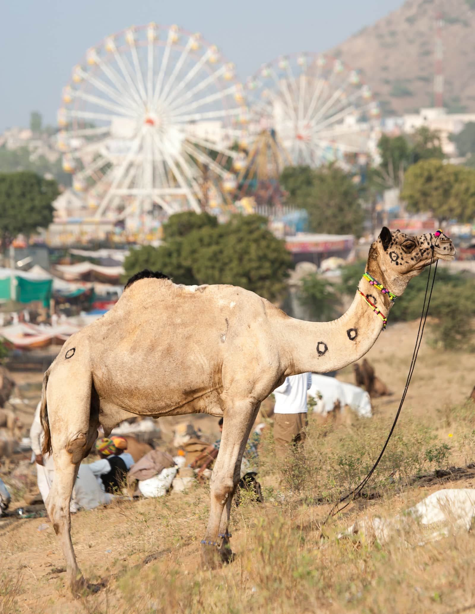 camel-ferris-wheel-camel-pushkar-camel-fair-india-travel-london-freelance-photographer-richard-isaac-3200
