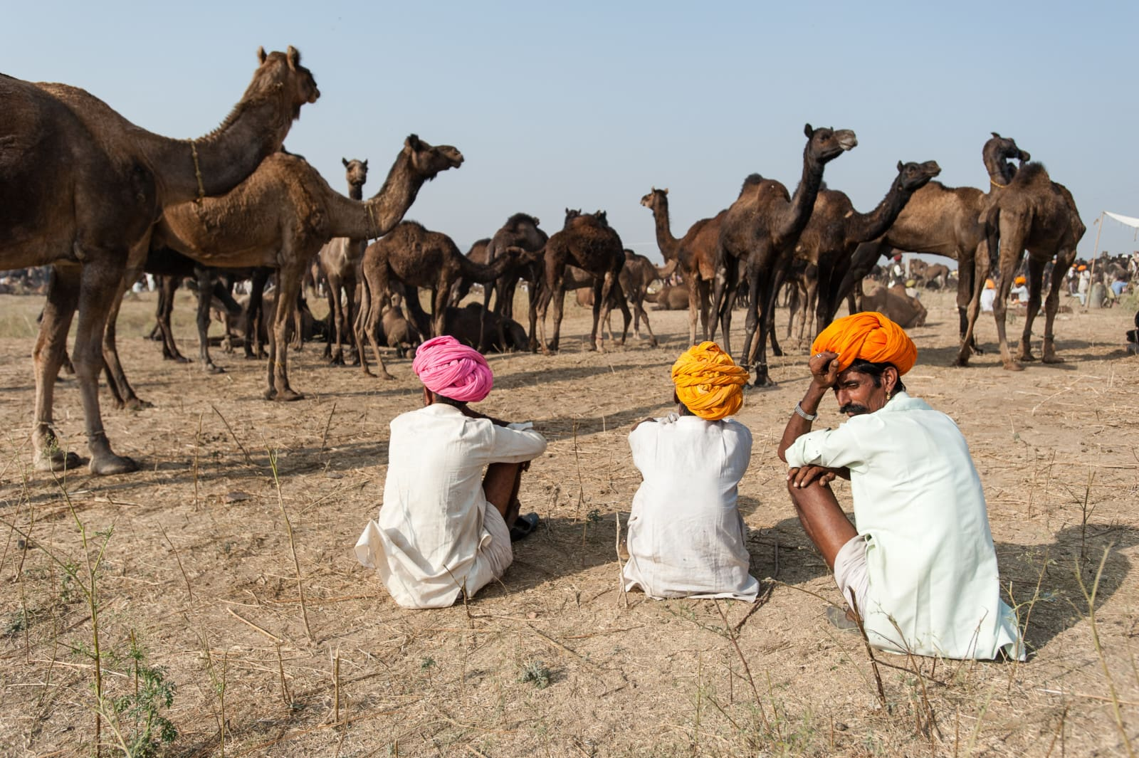 camel-pushkar-camel-fair-traders-london-freelance-photographer-richard-isaac-3200