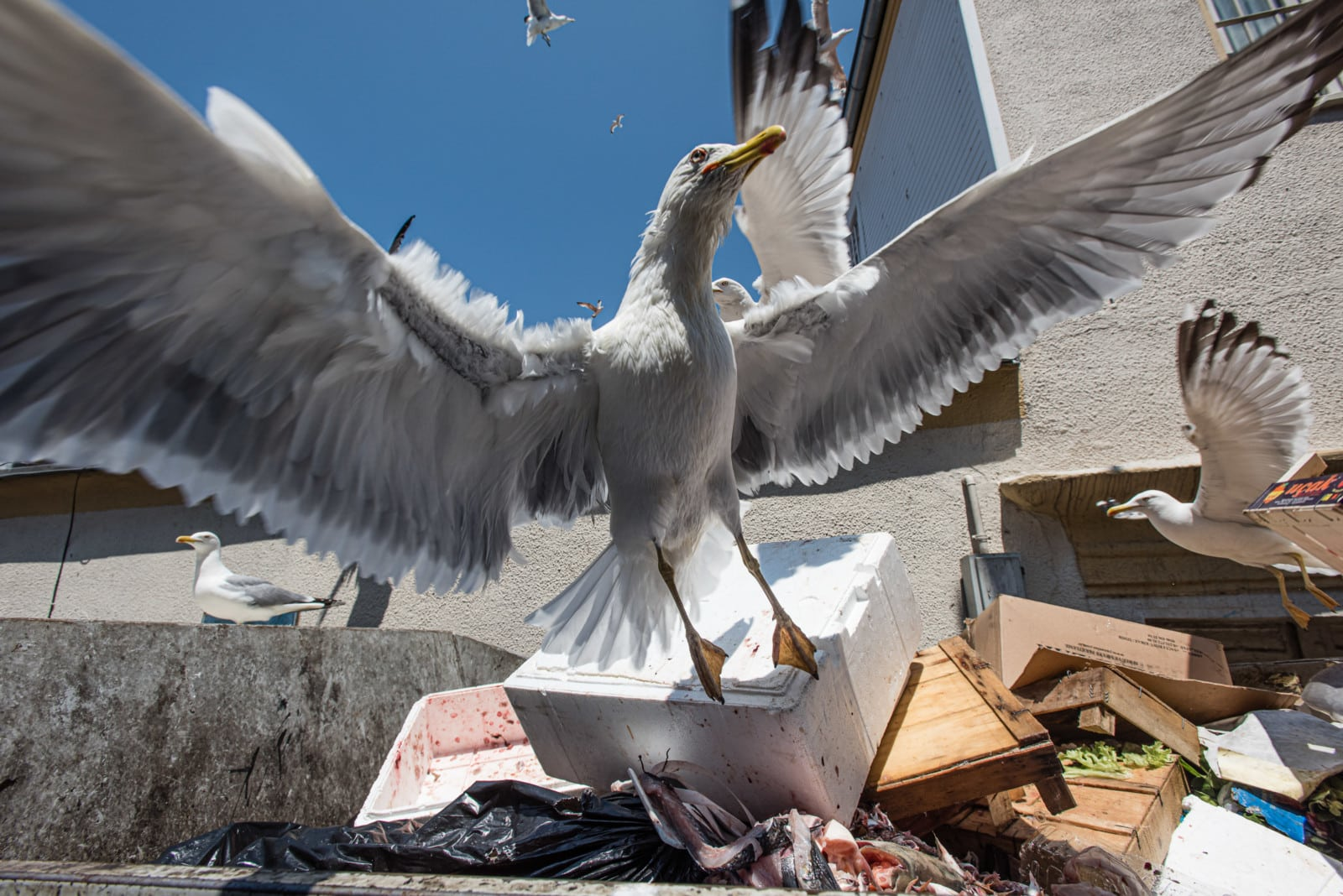 seagul-istanbul-turkey-london-freelance-photographer-richard-isaac-3200