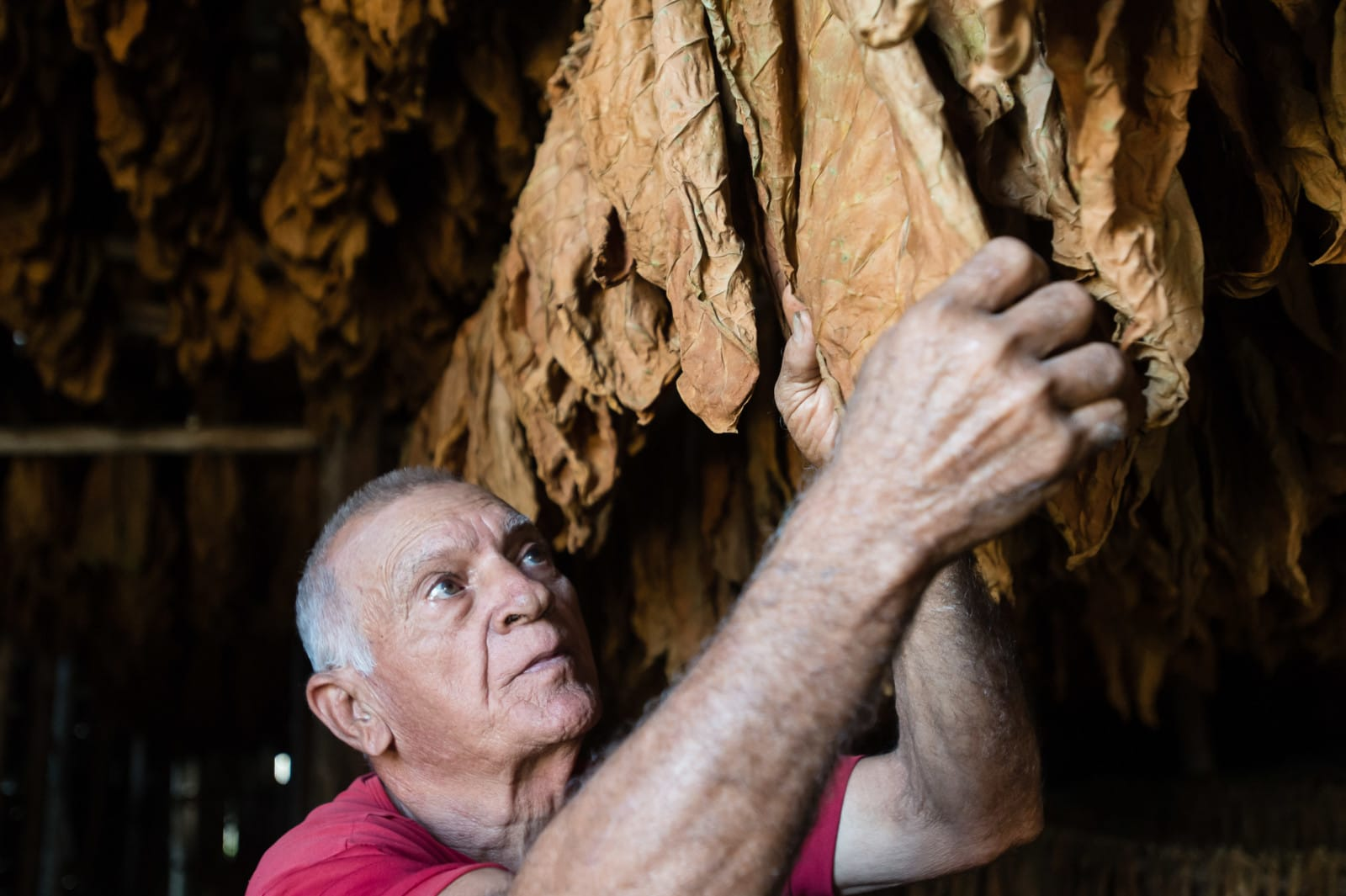 tobacco-vinales-cuba-london-freelance-photographer-richard-isaac-3200